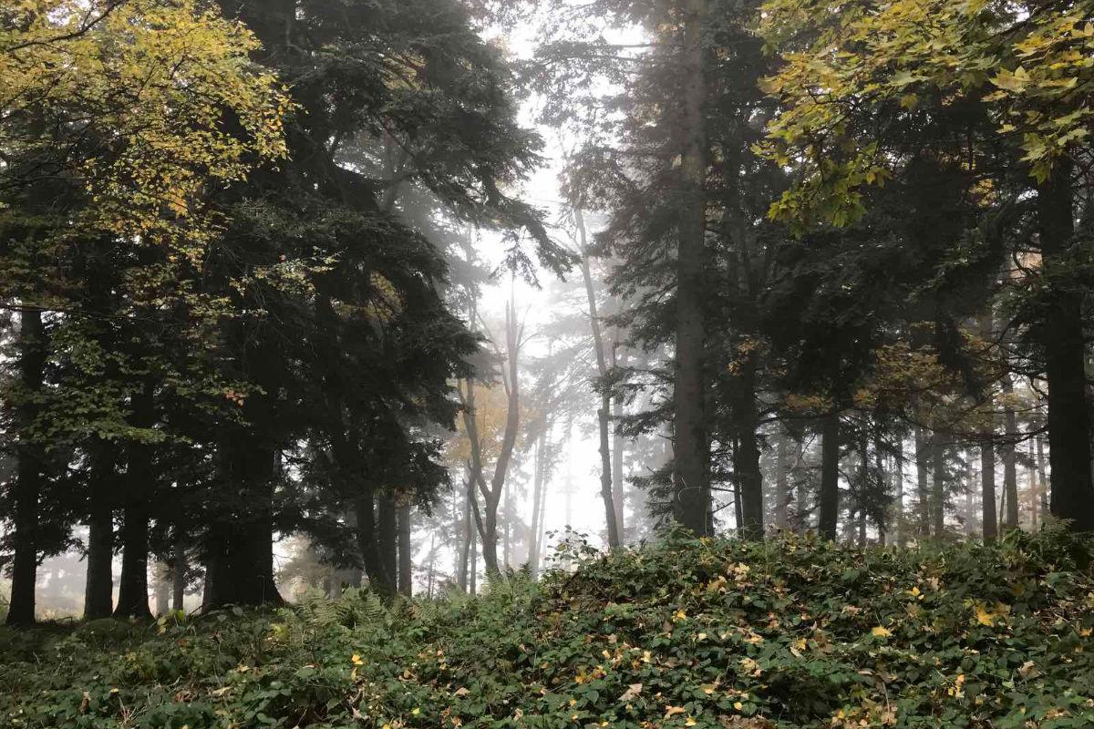 A fák rejtett kommunikációja | AZ1.HU